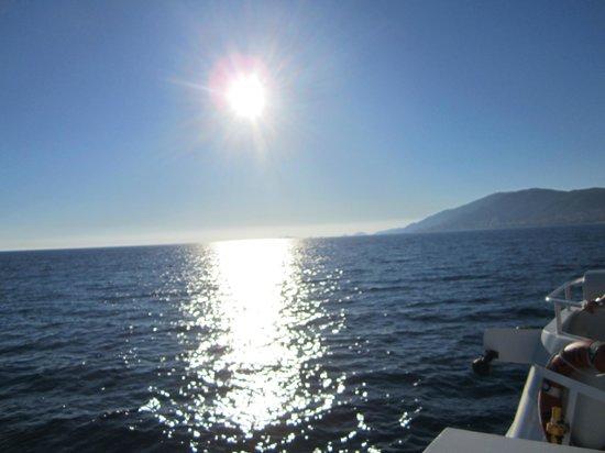 Nave Va Promenades en Mer: Ride back - goodbye dolphins