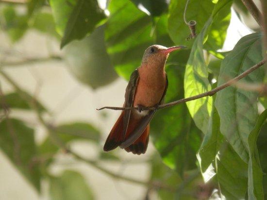 Bed and Breakfast Villa Riviera: Naturaleza espectacular típica de Nicaragua