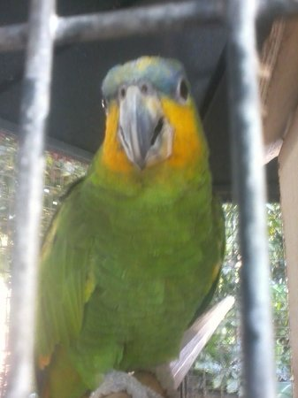 Parque del Sol: Este es mi amigo COCO