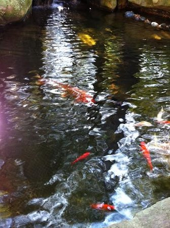 Hudson's Bar & Grill: pretty koi pond out front