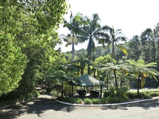 Montville Mountain Inn Resort: View from verandah