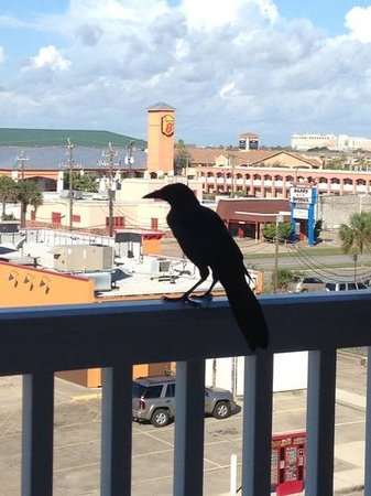 Quality Inn & Suites Beachfront: visitor on the balcony