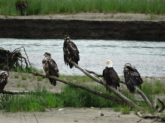BEST WESTERN Grandma's Feather Bed: Eagles near downtown Juneau