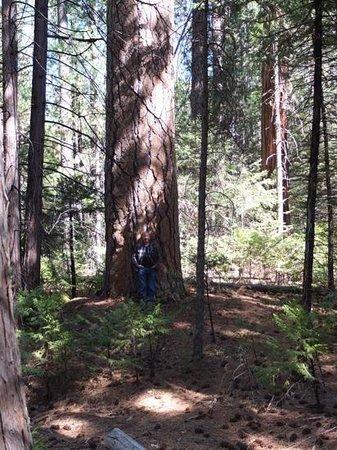 Evergreen Lodge at Yosemite: Jeff at Evergreen Lodge