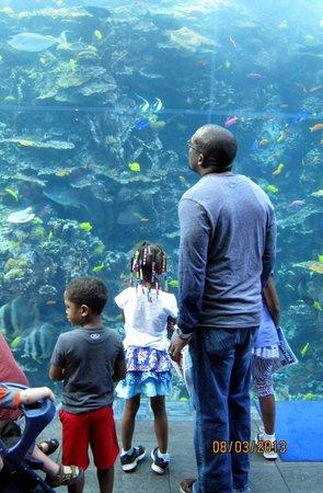 Georgia Aquarium: ****
