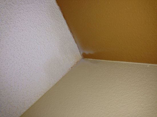 Canada Drive Hotel and Suites: Damp / mould