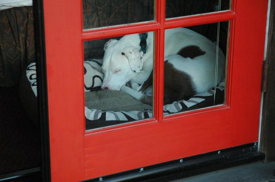 Stanford Inn by the Sea : Pet friendly in a BIG way!