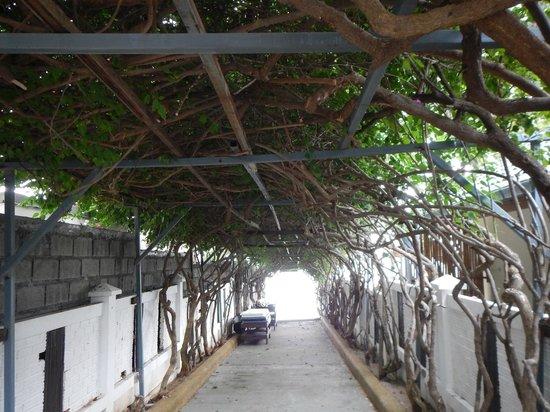 Idyllic Samui Oceanfront Resort & Villas: Арка на пляж