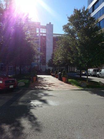 Hampton Inn & Suites Boston Crosstown Center: Jardins