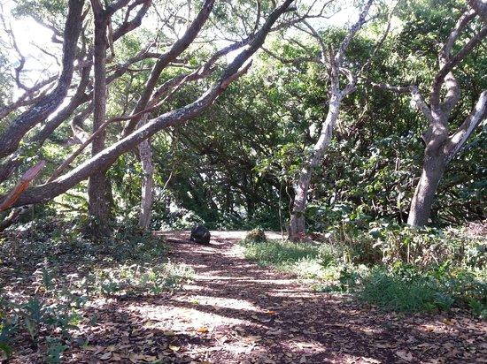 Kalani : walkway to the dining lanai