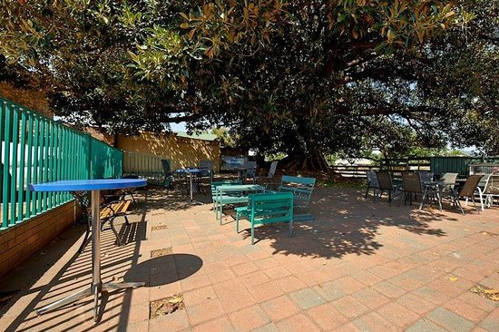Fig Tree Motel: 170 year old Fig Tree