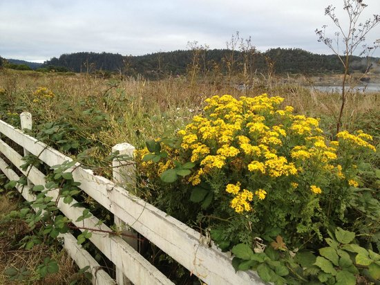 Mendocino Coast: Open landscapes out to the sea