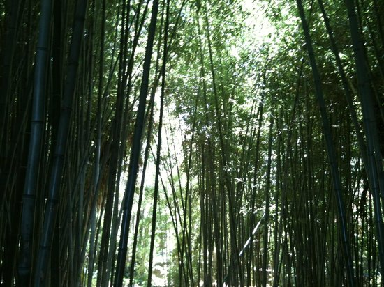 Bamboo forest - Picture of Los Angeles County Arboretum & Botanic ...