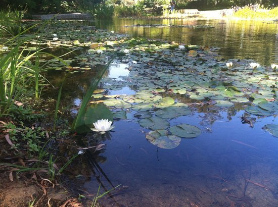 Norton Simon Museum: The beautiful waters and lily pads of the Norton Simon landscape