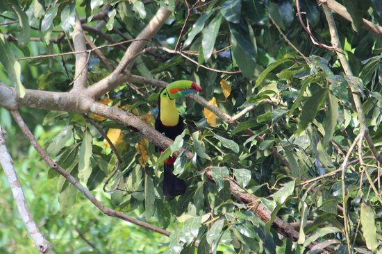 Gamboa Rainforest Resort: Toucan