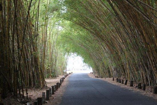 Gamboa Rainforest Resort : L'arrivée