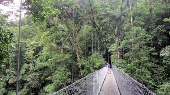 Arenal Hanging Bridges: One of the steel bridges