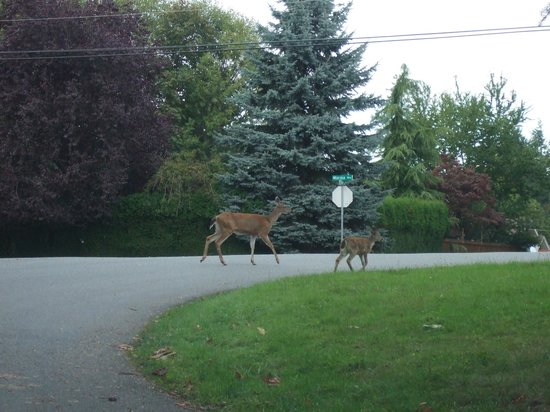 Pacific Shores Resort and Spa: Local residents