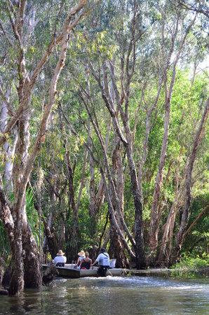 Davidson's Arnhemland Safari Lodge: Cruise through the paperbark lined creek