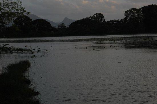 Banana Rest: A deux pas de l'étang et ses nombreux oiseaux