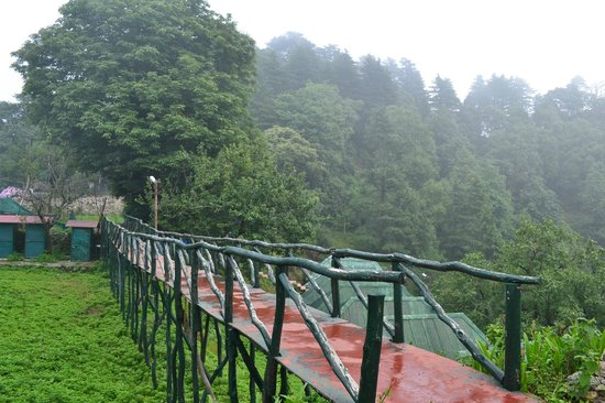 Cloud End Forest Resort: pathways