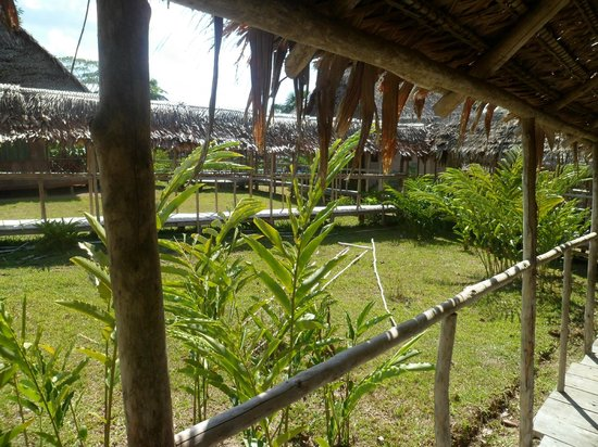 Amazon Rainforest Lodge: Alrededores, por la mañana
