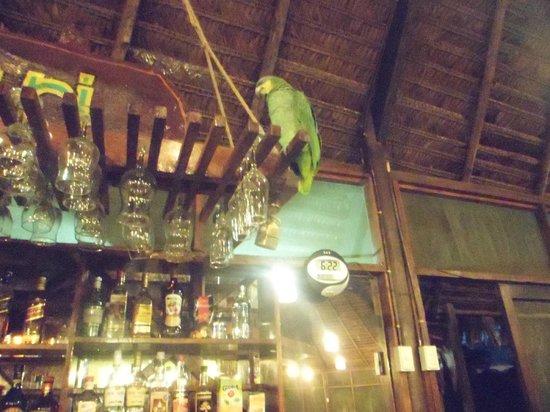 Amazon Rainforest Lodge: Lorito en el bar