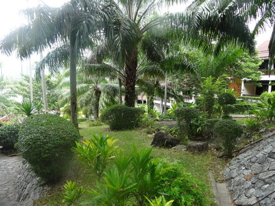 NovaSamui Resort Koh Samui: the garden seen from our room