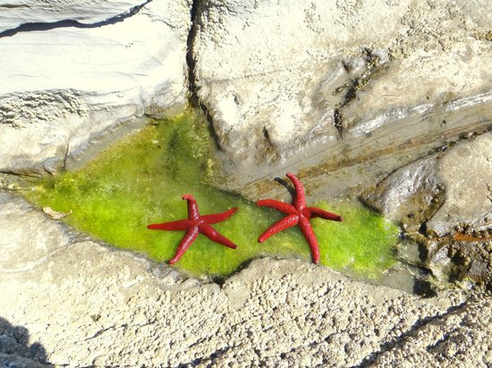Hotel Jolanda : Недалеко от пляжа нам встретились эти красавицы