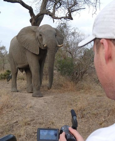 Gomo Gomo Game Lodge: This big guy got very close...but HJ saved the day with a bit of a roar/bark haha