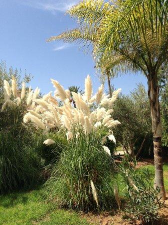 Palais Aziza & Spa: beautiflly kept gardens