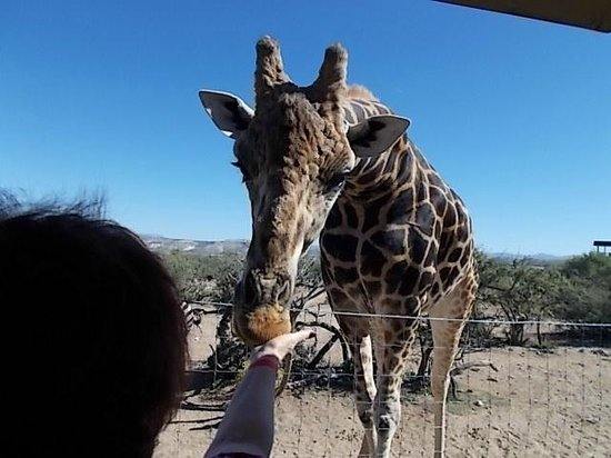 Out of Africa Wildlife Park: feeding the animals