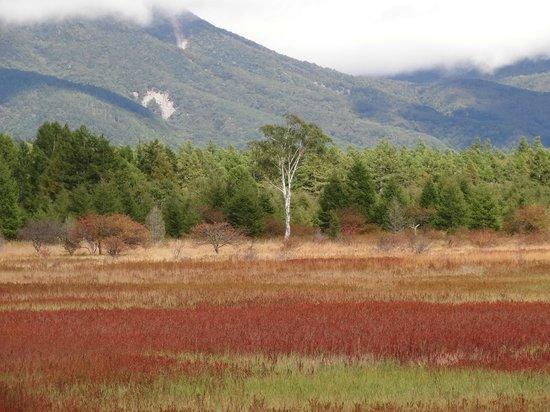 Odashirogahara Field: 草紅葉と小田代の貴婦人