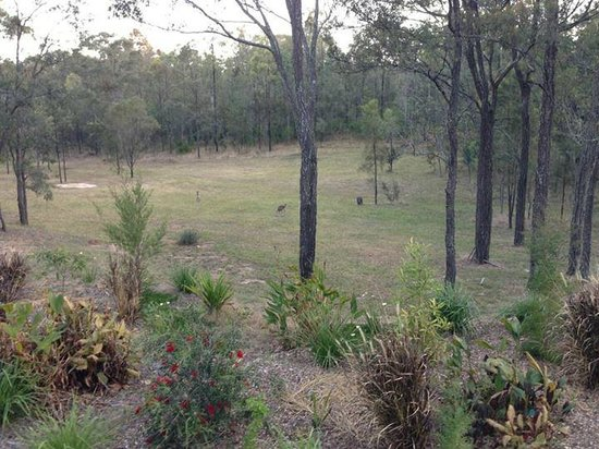 Deja Vu Estate: view while having breakfast on the back veranda