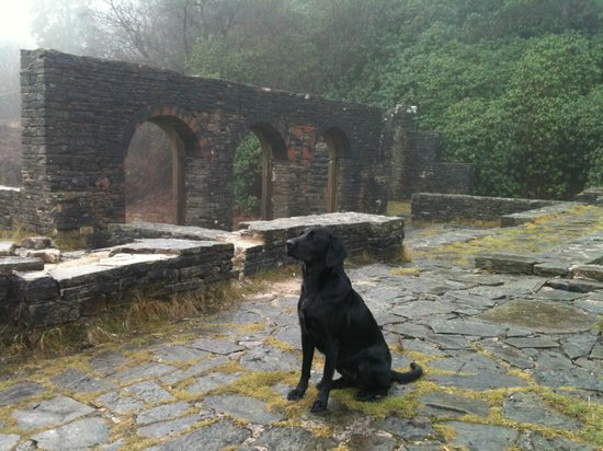 Goyt Valley: A dog's view of Errwood Hall