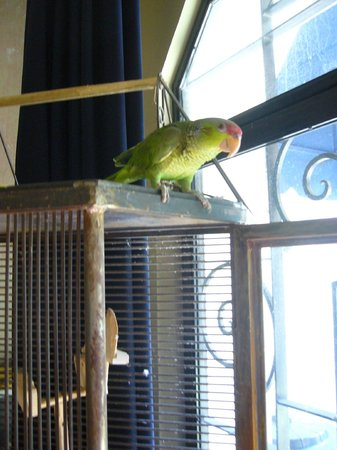 La Perla Boutique Bed & Breakfast: zapato the lovely housebird