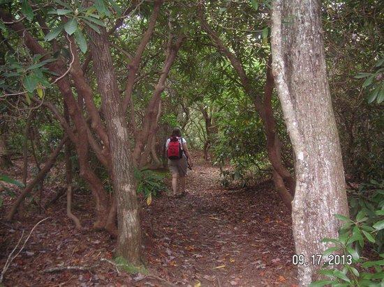 Len Foote Hike Inn: On the Trail