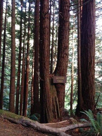 Trees of Mystery: A tree of mystery. really?