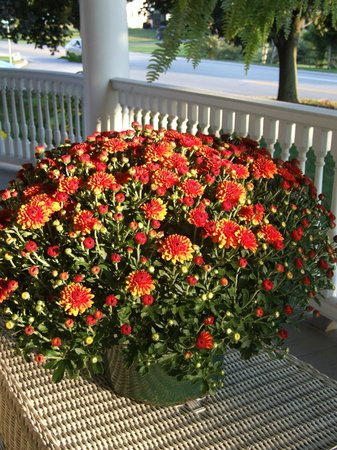 Walnut Lawn B&B: Flowers on the front porch