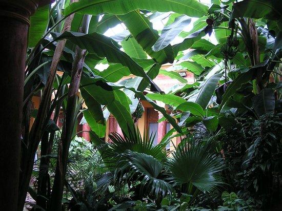Hotel Casa Mexicana: giardino