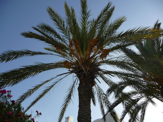 Dar Ali Residence: Garten