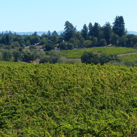 Reserve Wine Tours - Private Tours: View from Iron Horse