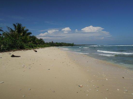 Surfcamp - Palm Beach Krui: beach