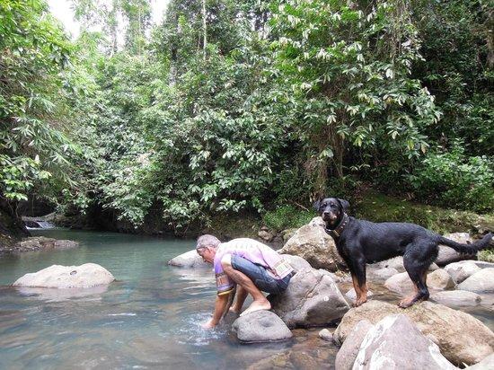 Surfcamp-Palmbeachkrui: jungle
