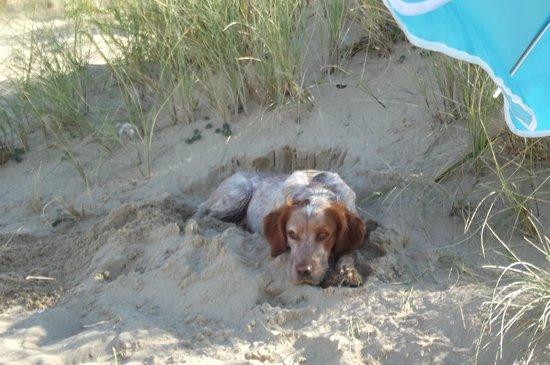 Camping Les Cercelles : sur la plage des Saumonards je bulle!!!