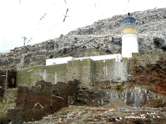 Scottish Seabird Centre: Old lighthouse on Bass Rock (1902) - Some of the northern gannets had wingspans of nearly 6 feet