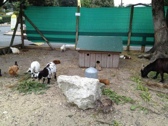 Camping Atlantique Parc : Petting zoo