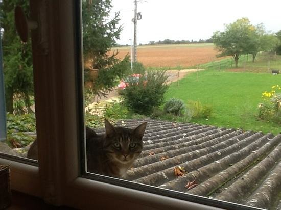 Auberge de la Tuilerie : an adorable visitor by our window