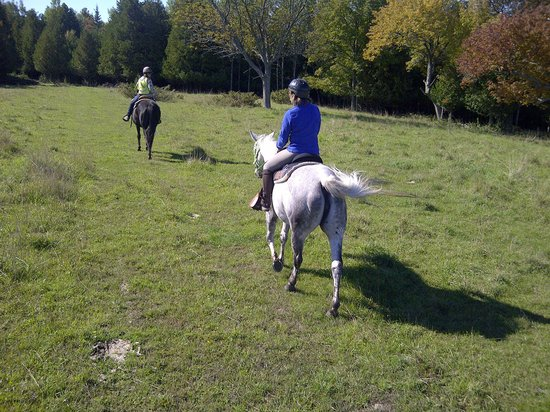 Honora Bay Riding Stables: Fiona on Southern comfort