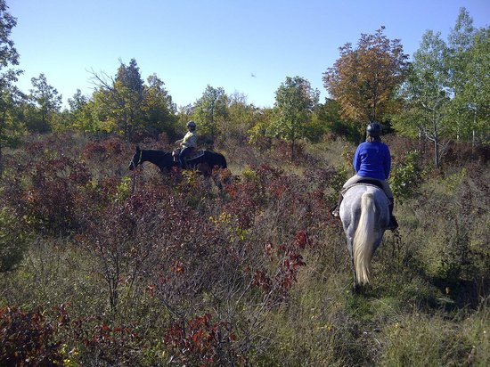 Honora Bay Riding Stables: towards the top of the hill